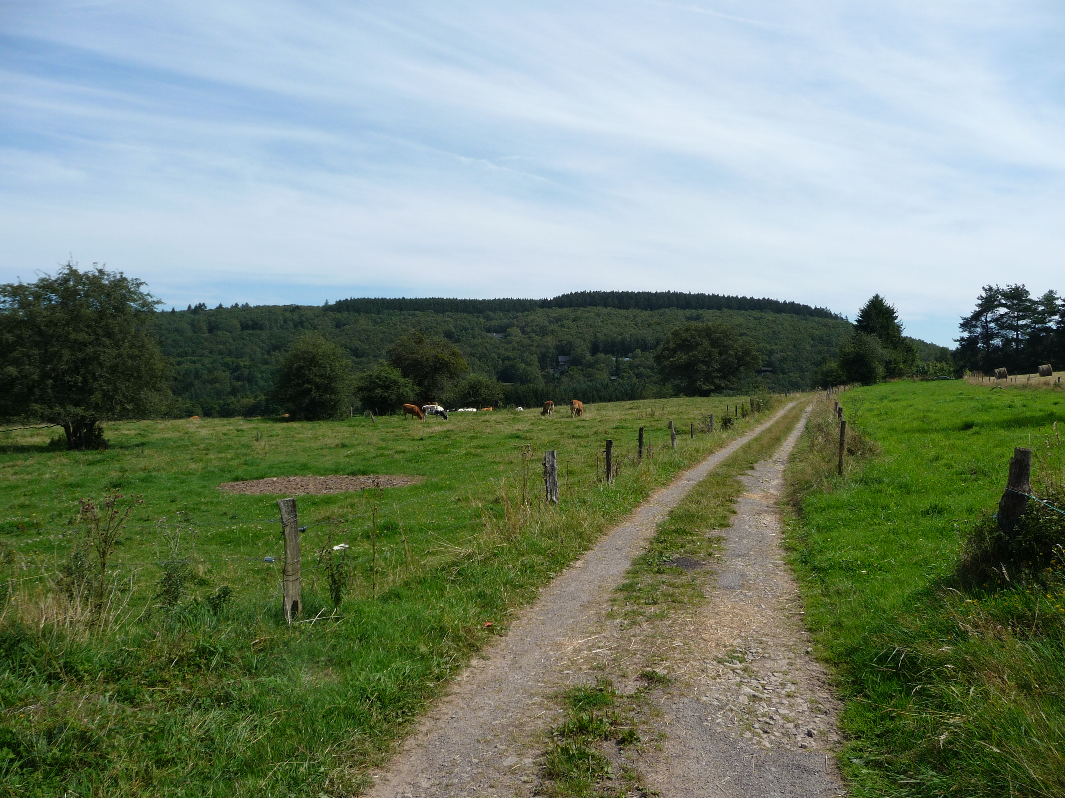 Walking in the Ardennes