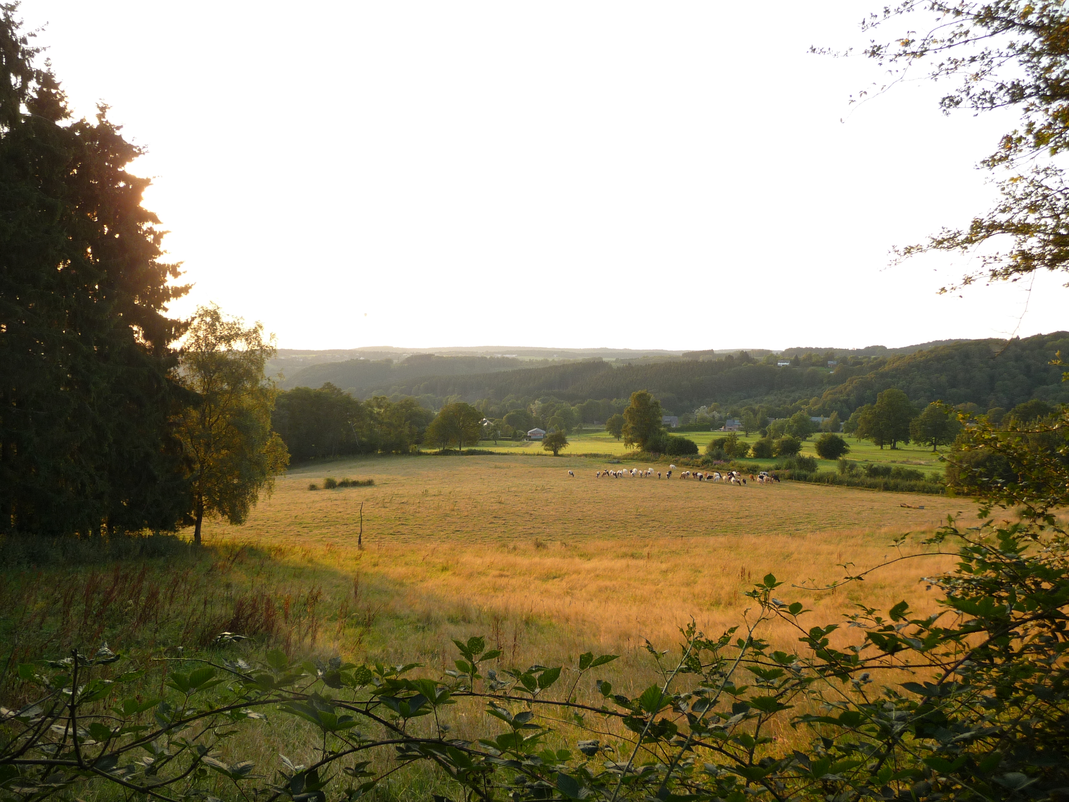 A golden evening in the Ardennes