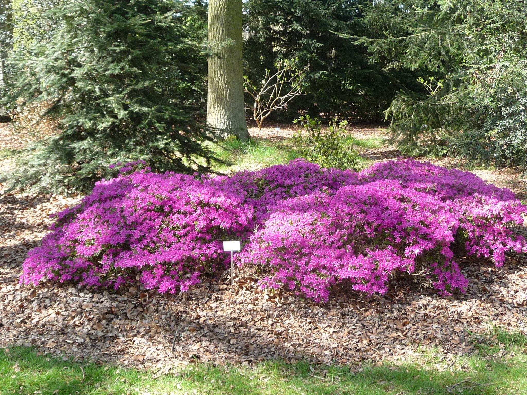 Visit Wespelaar and its arboretum