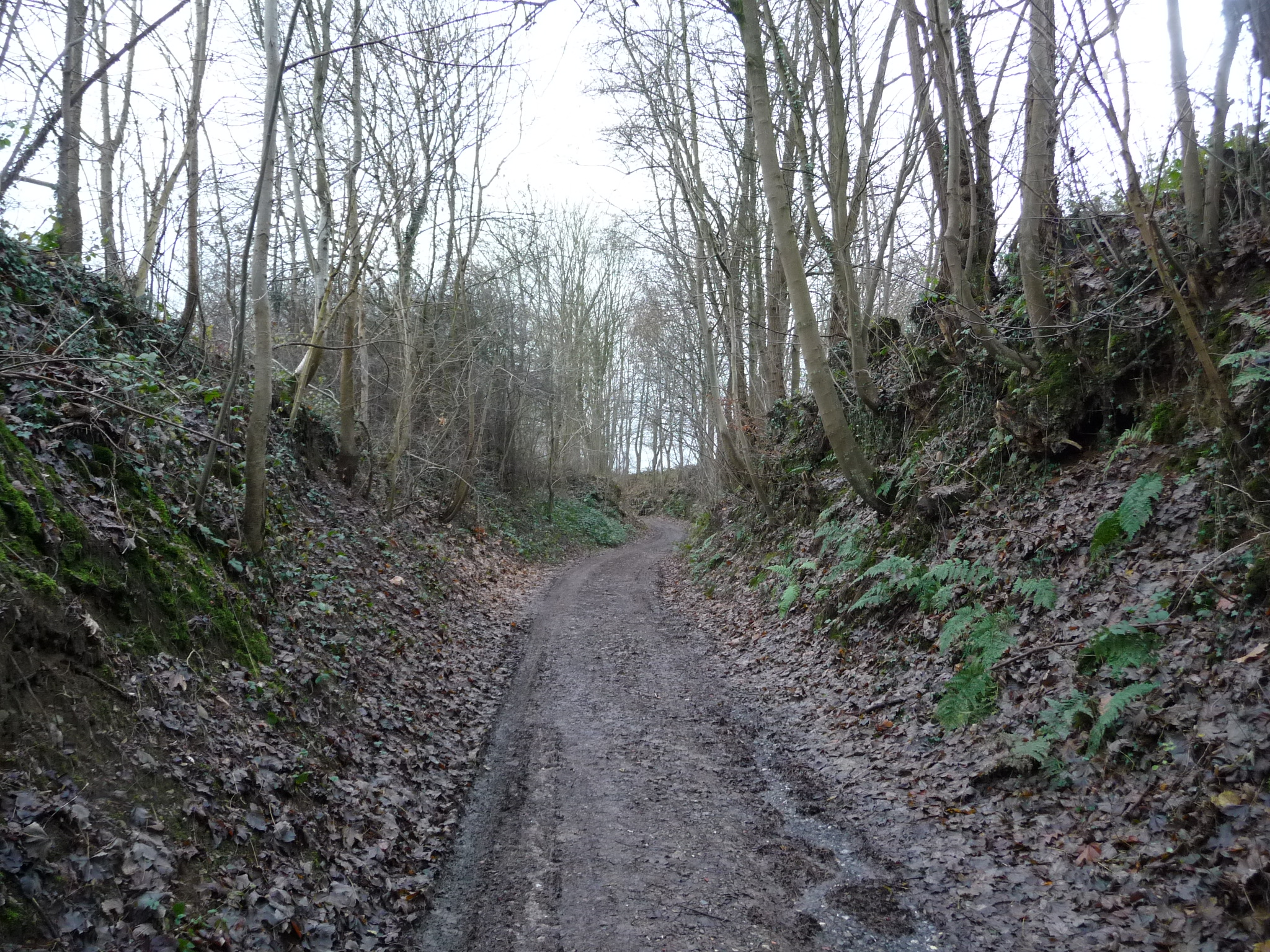The sunken lanes