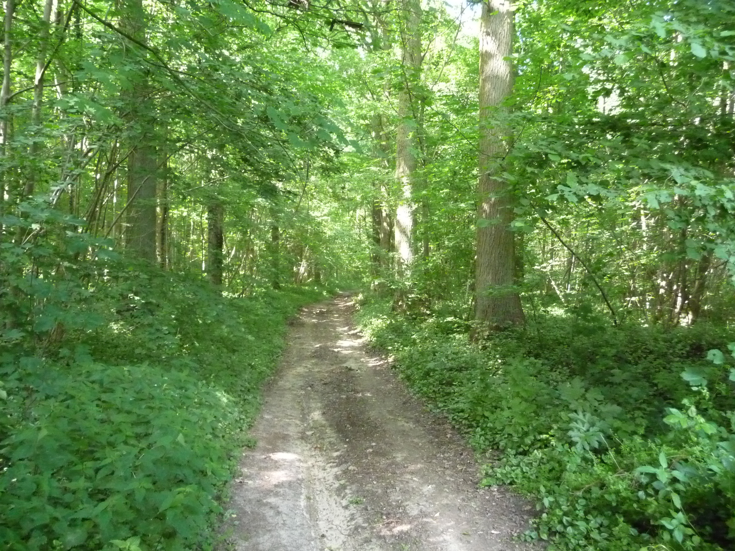 Walking near Archennes