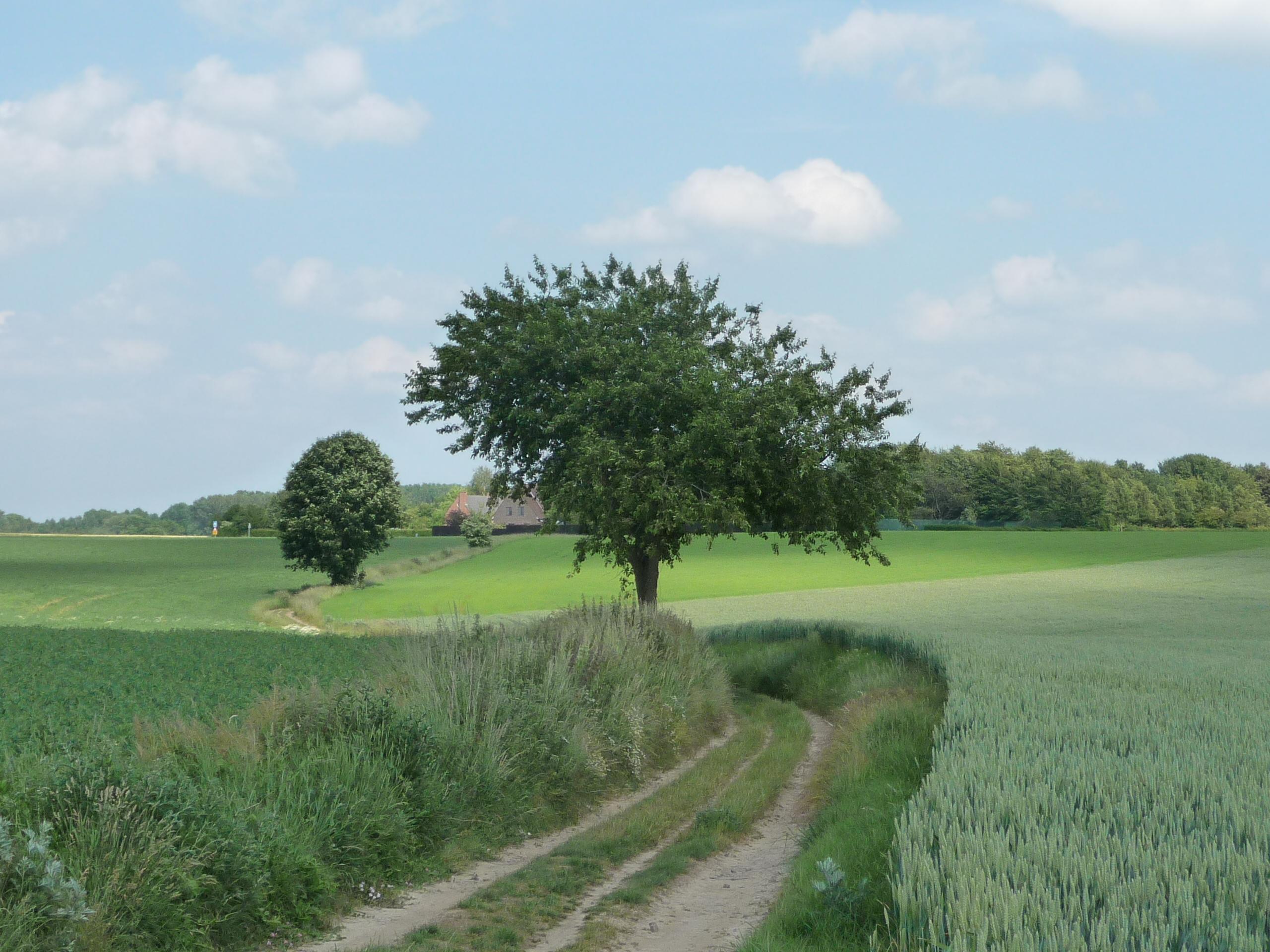 The fields around Gottechain