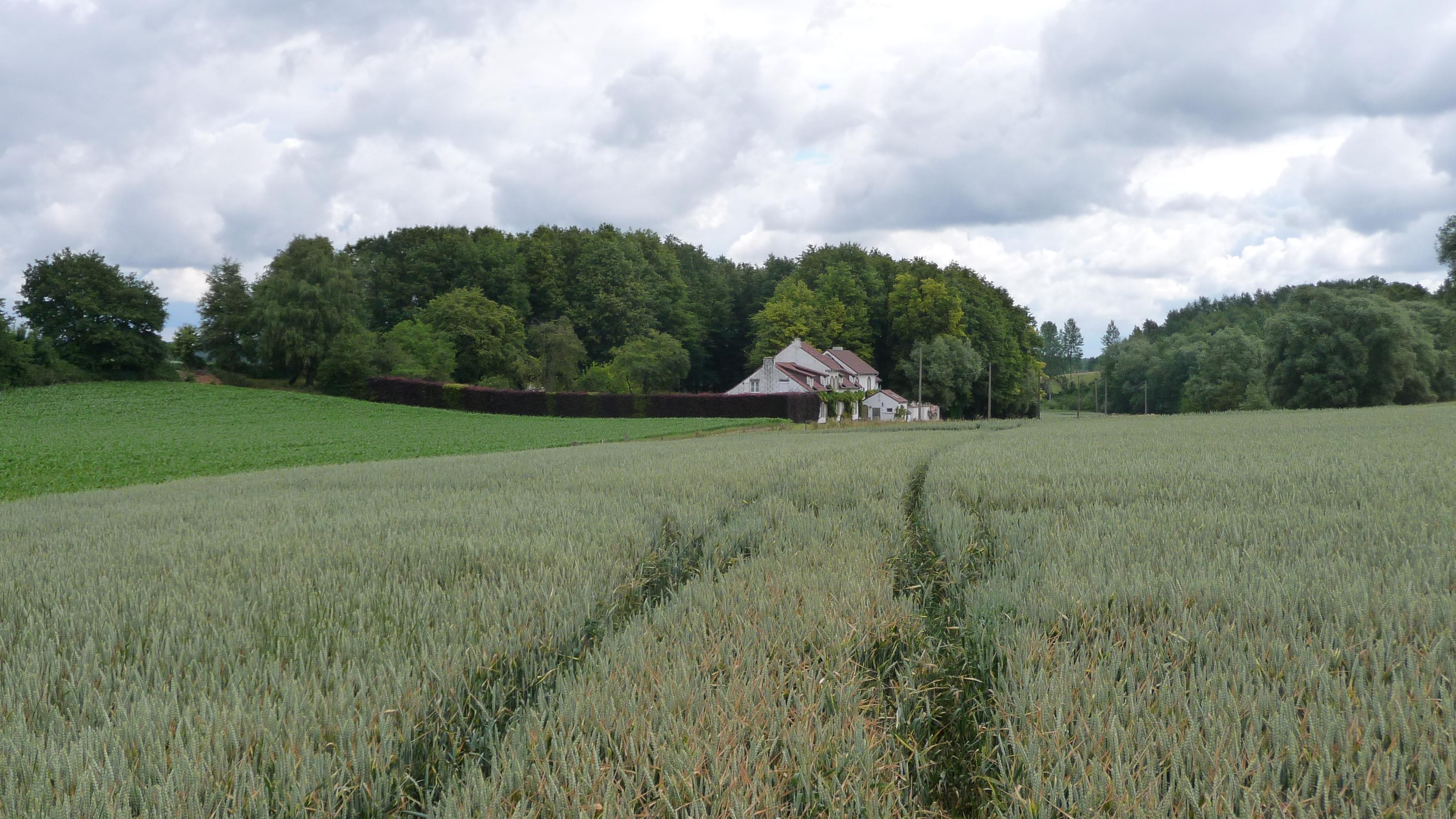 Fields in Bossut. Belgium