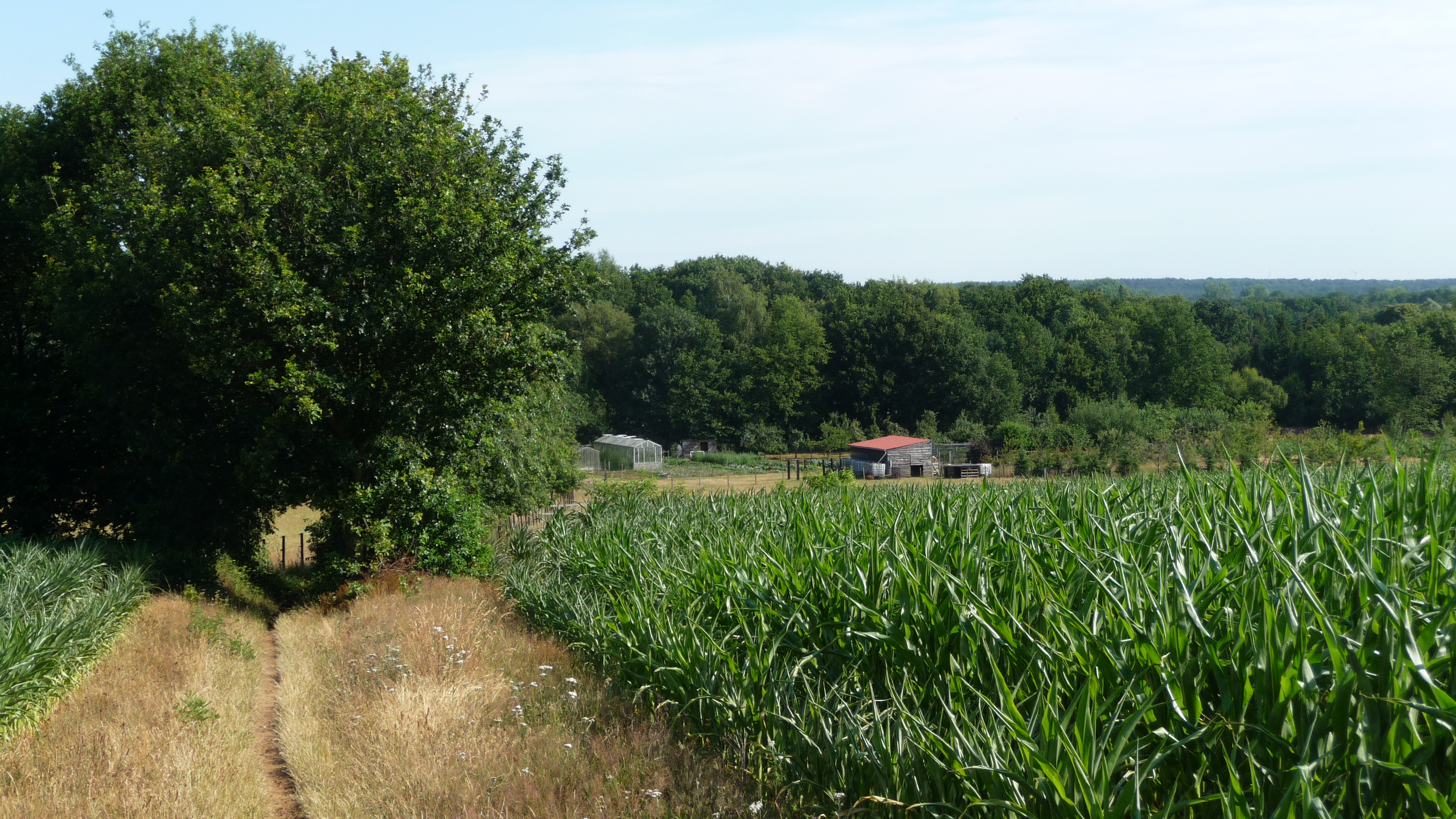 A 14k summer walk to the north of Diest