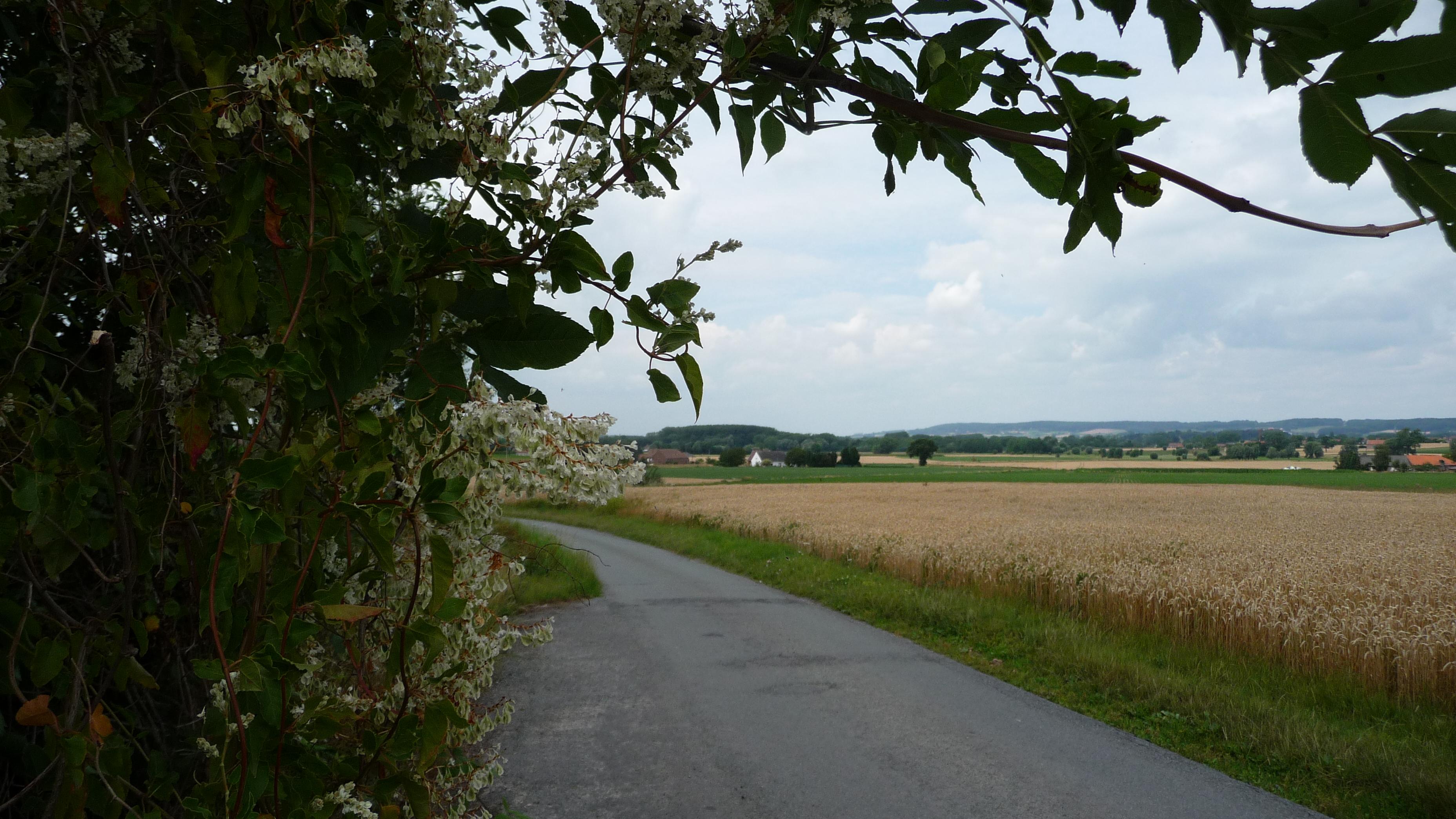 walking out of Saint Sauveur