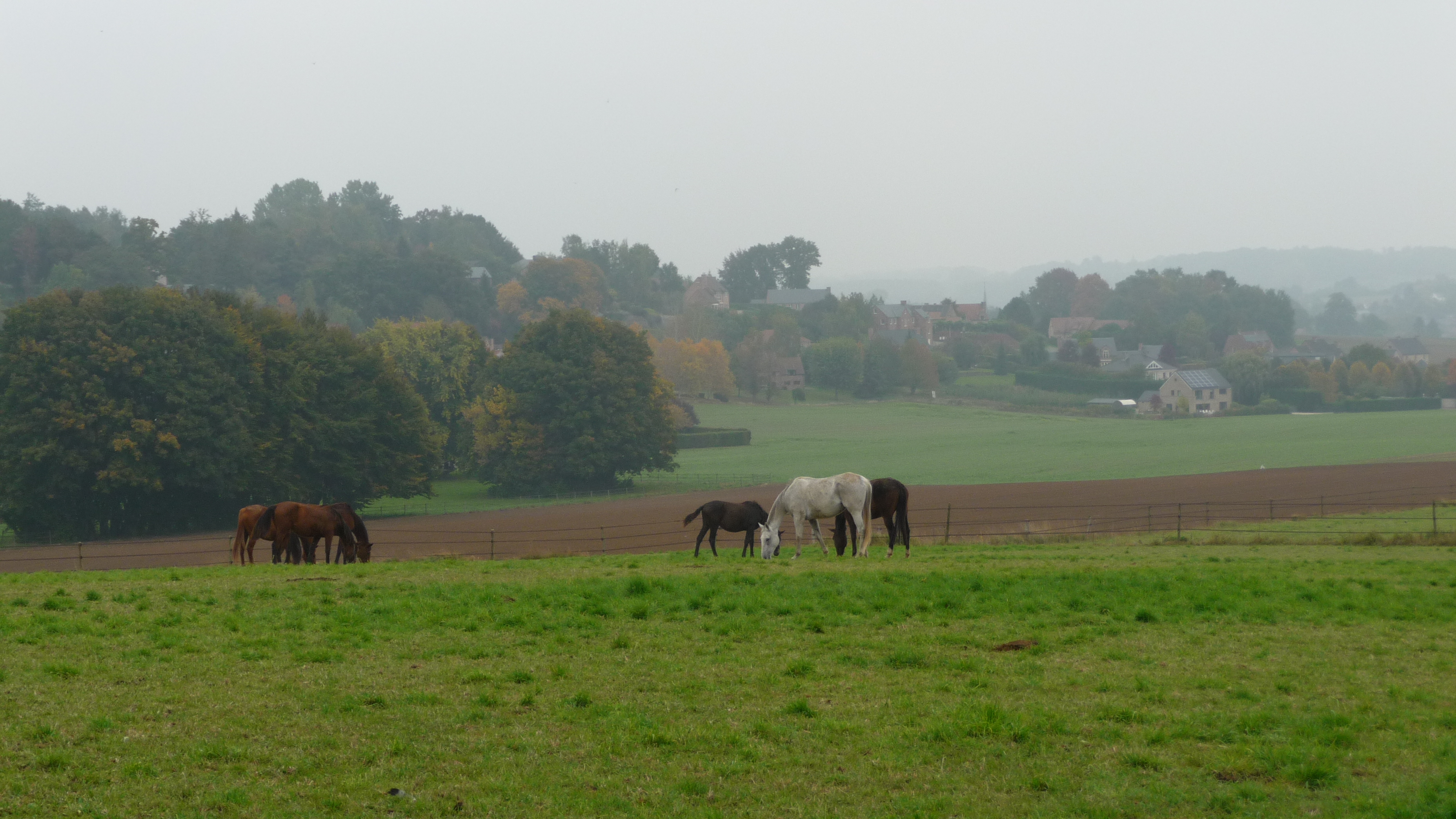 Horses in Doiceau