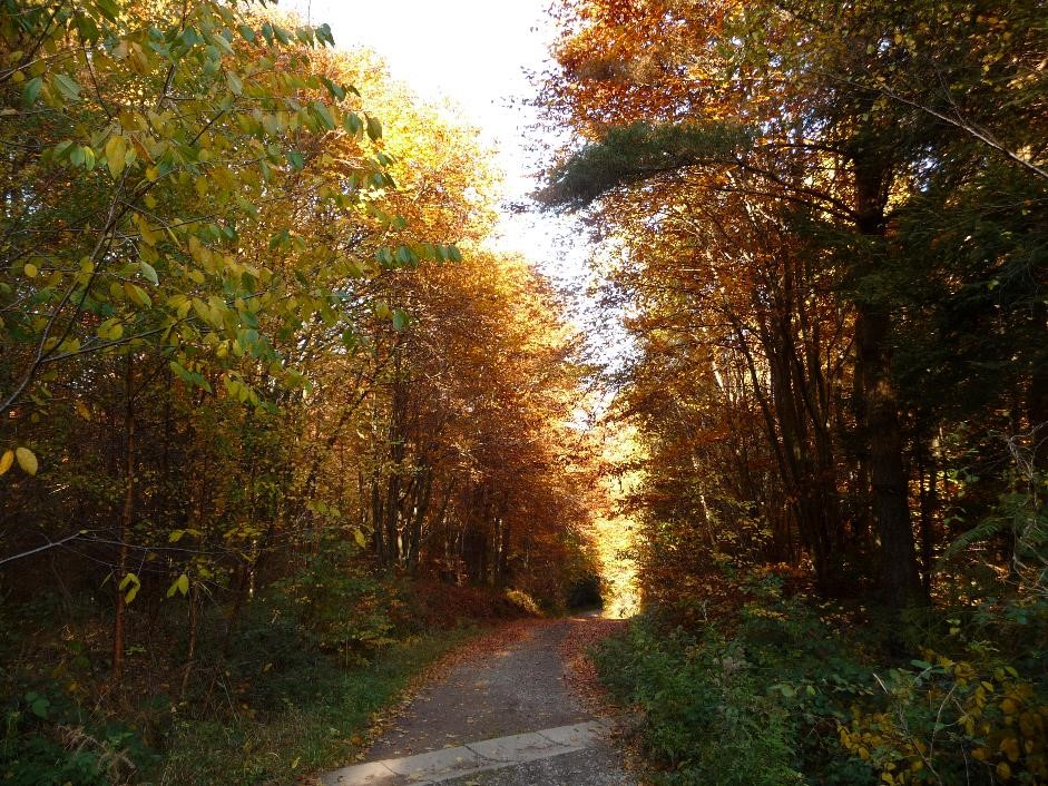 Hiking trail through the forests, Outrelouxhe