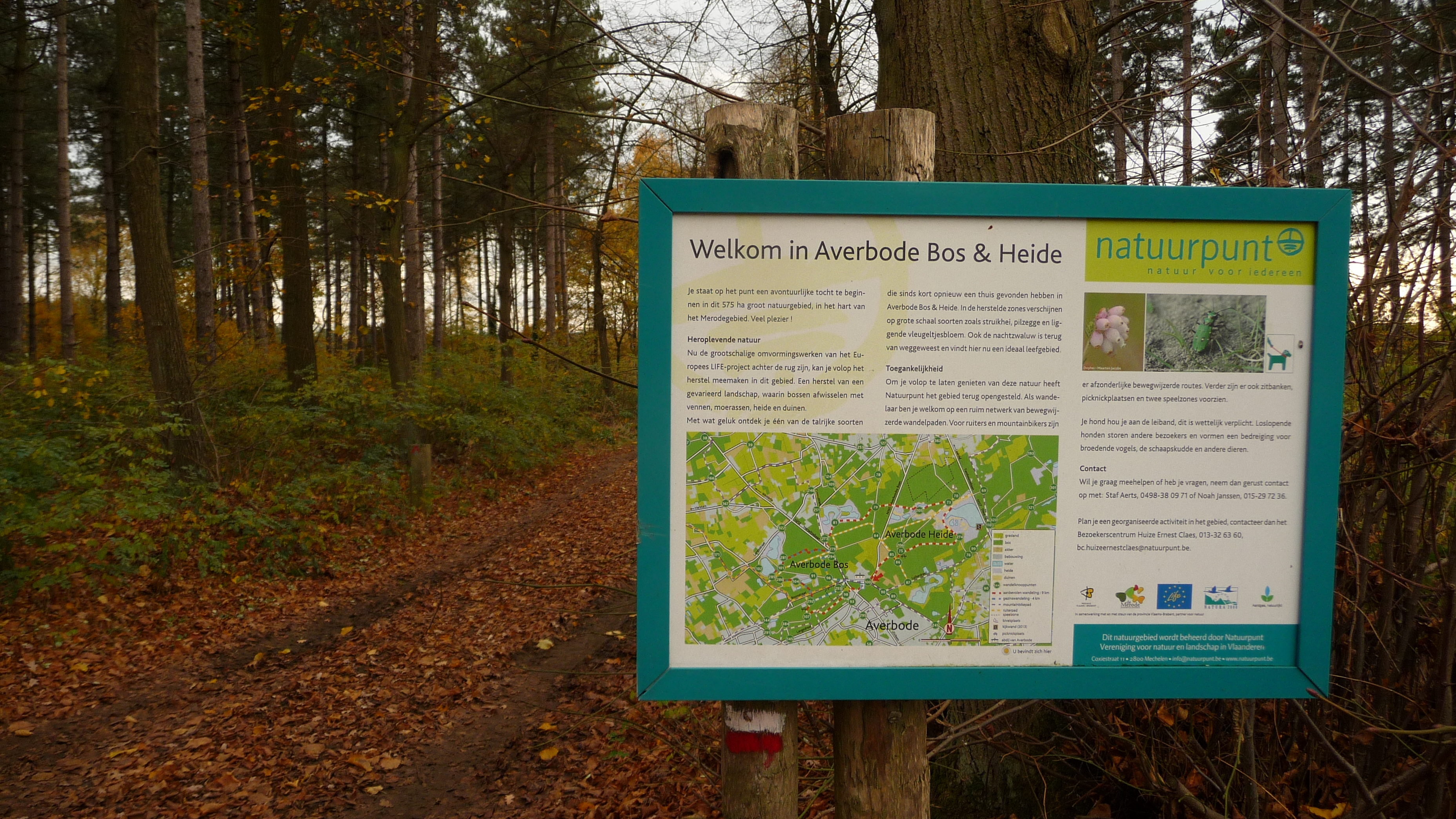 Welcome to Averbode Forest and Heath, Belgium
