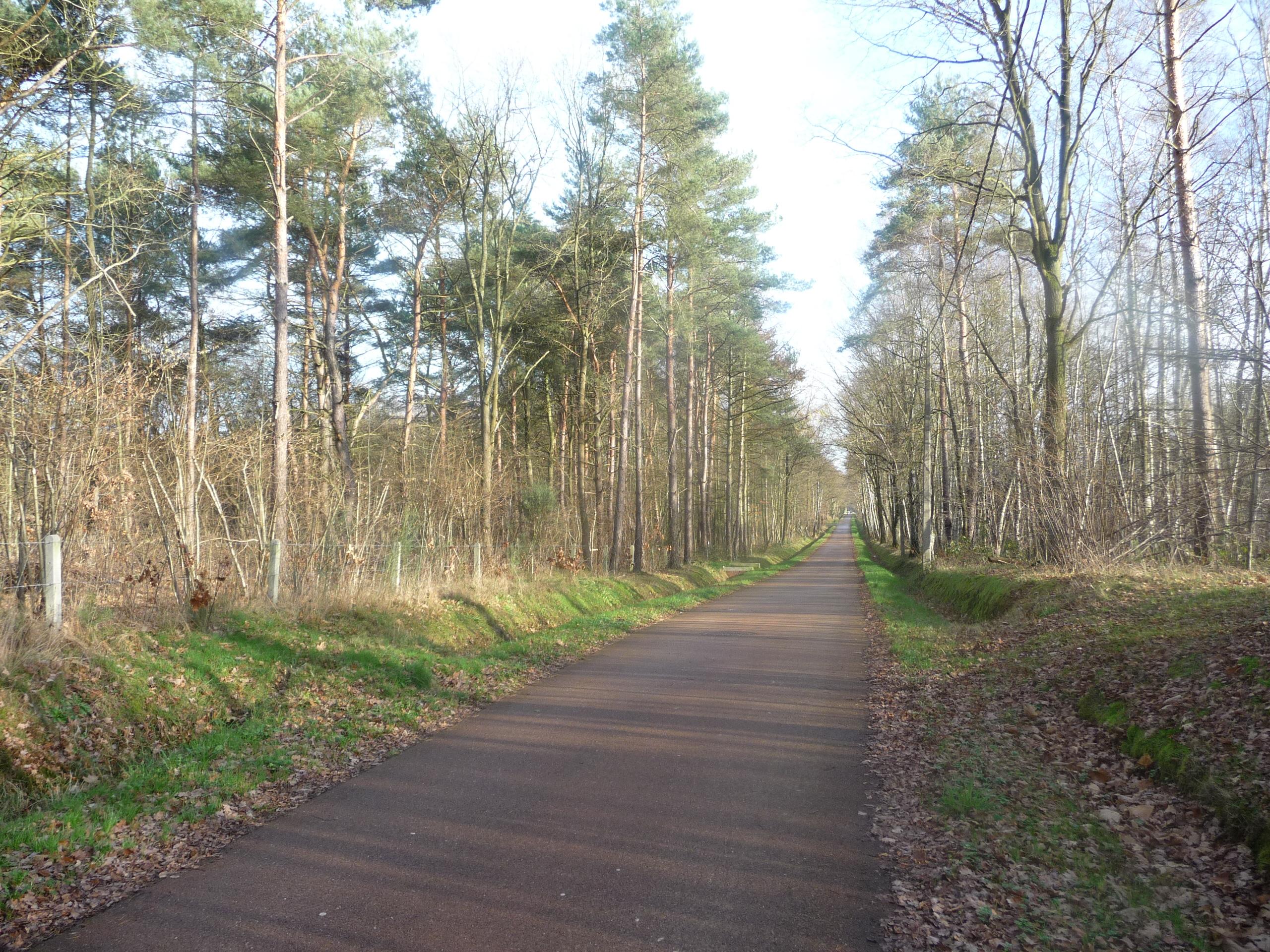 Woods in December