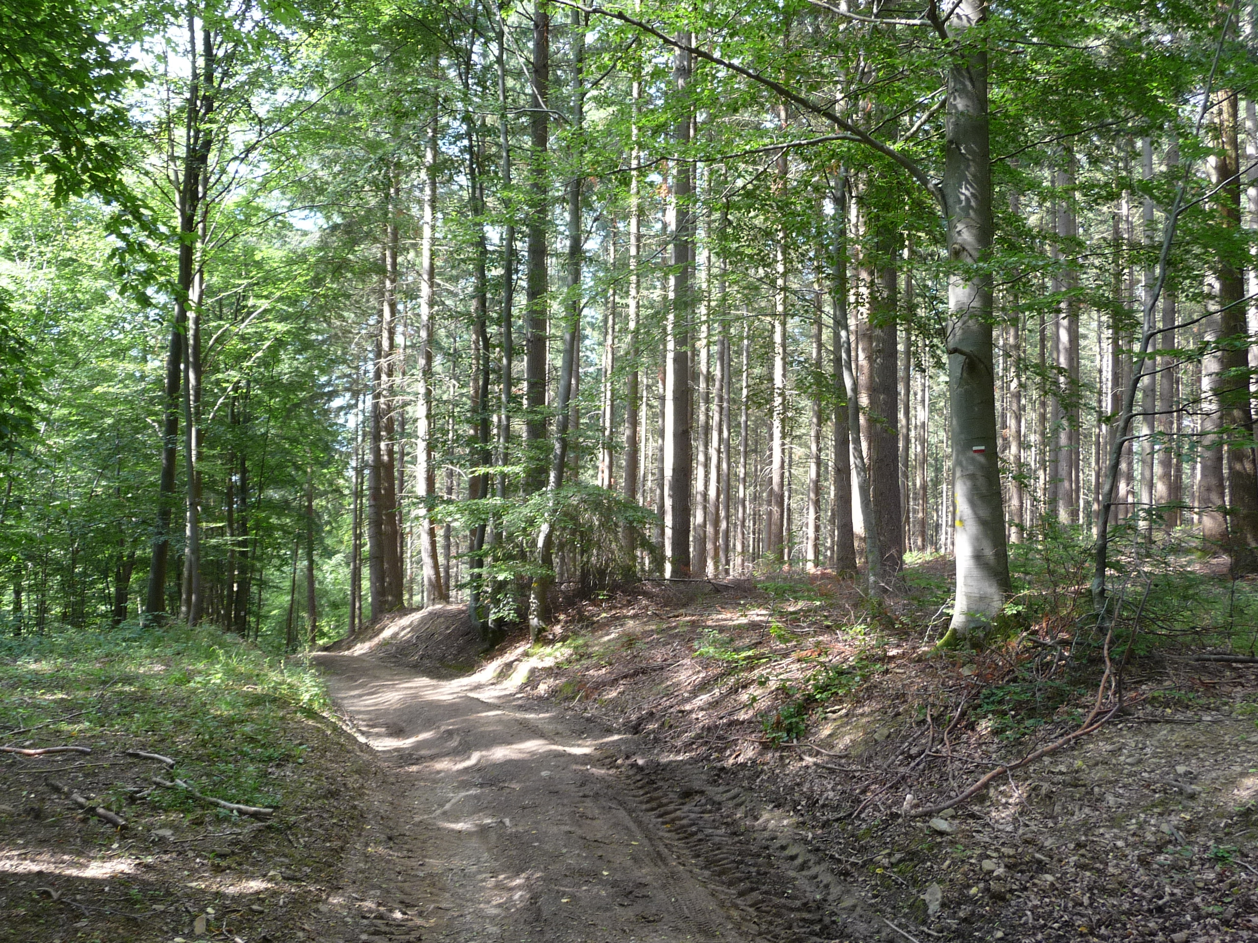 Forest near Masbourg