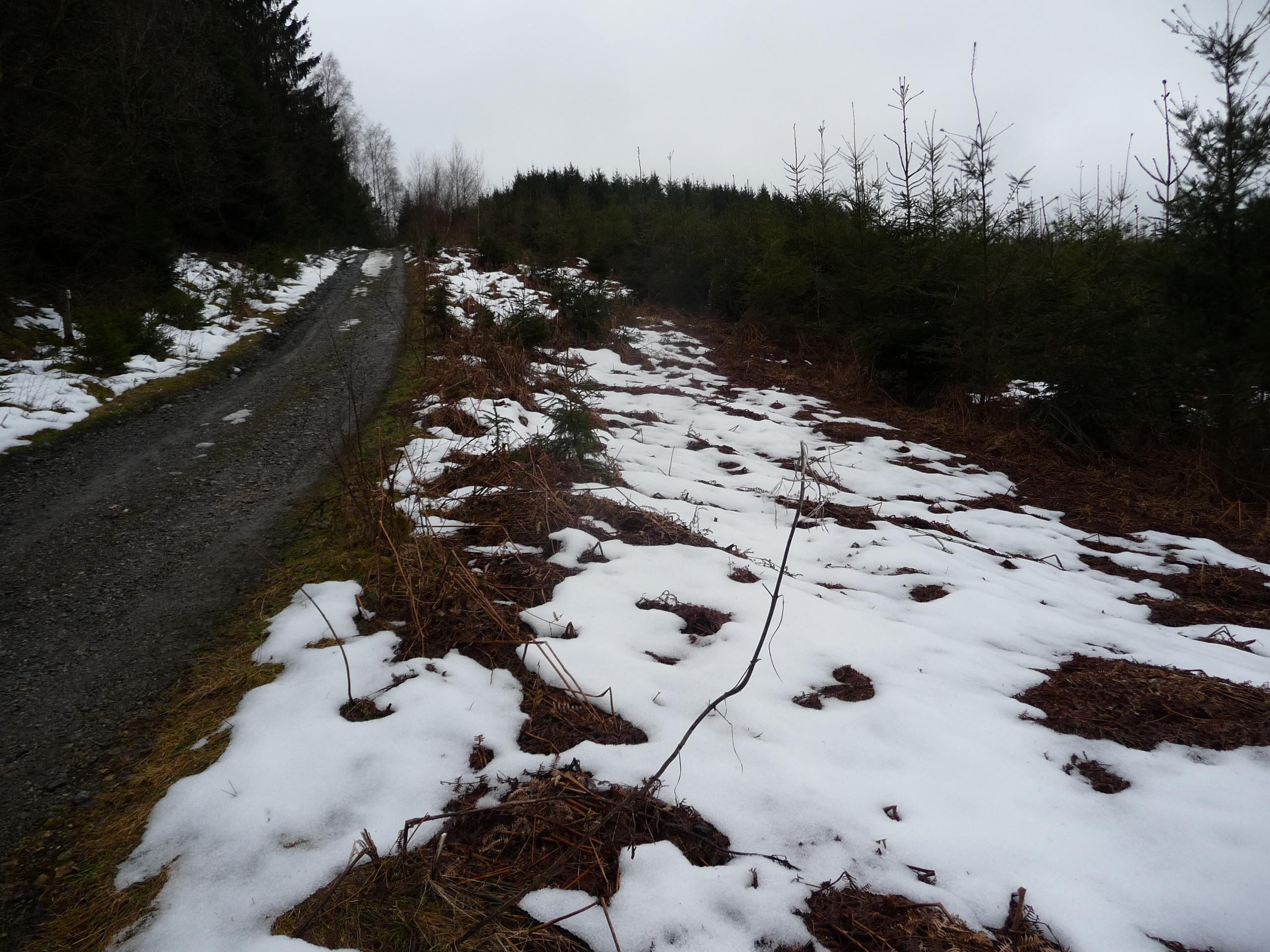 GR571-snow2