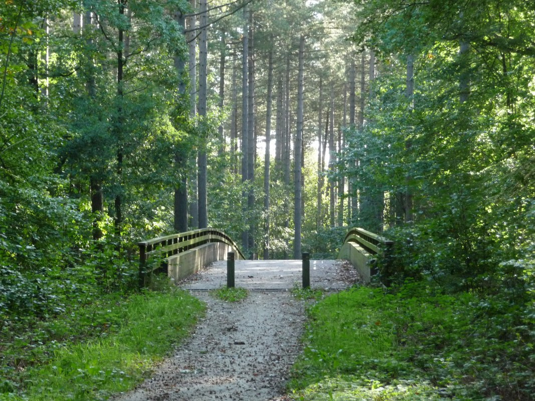 A walk in the Mollendaal Forest