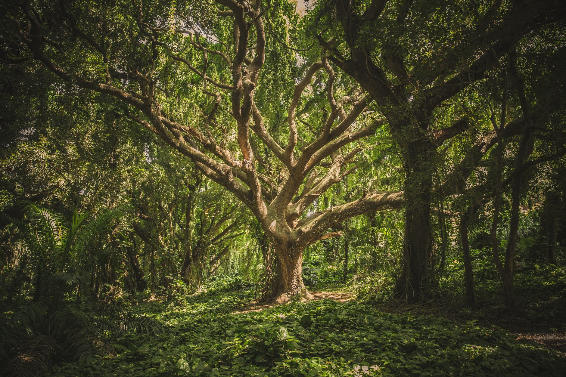 nature forest trees park