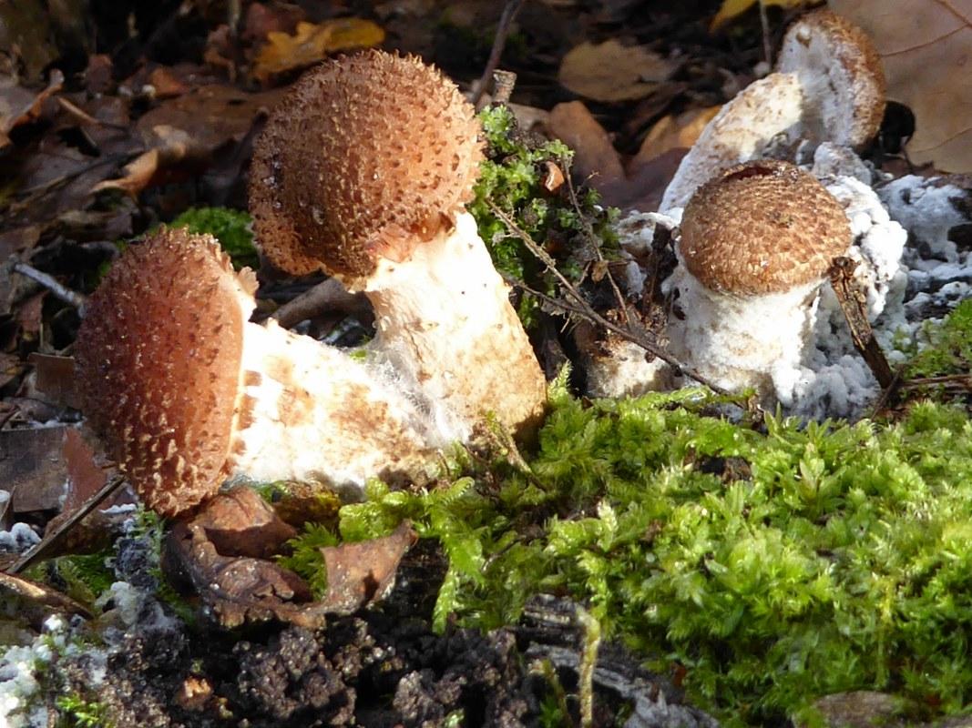 fungi-30