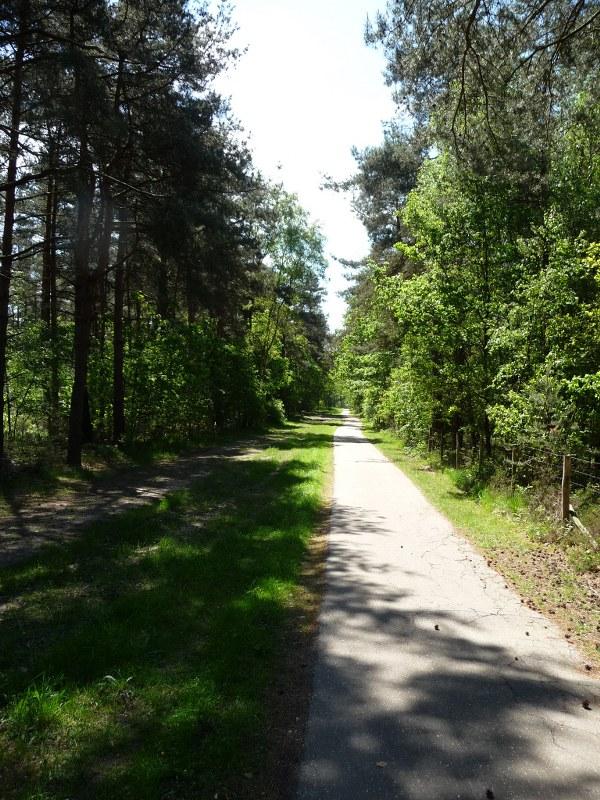 walking in the Mechelse Heide
