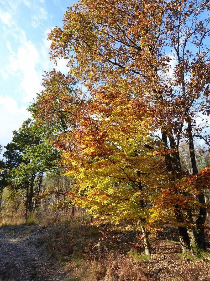 3 walks in the Mechelse Heide