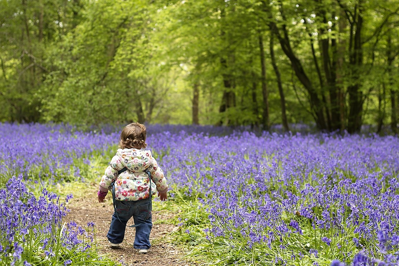 looking at the bluebells in the forest!