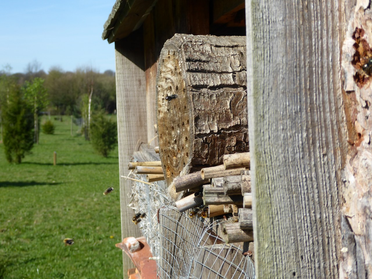 Bee hotel Arboretum de Lauzelle