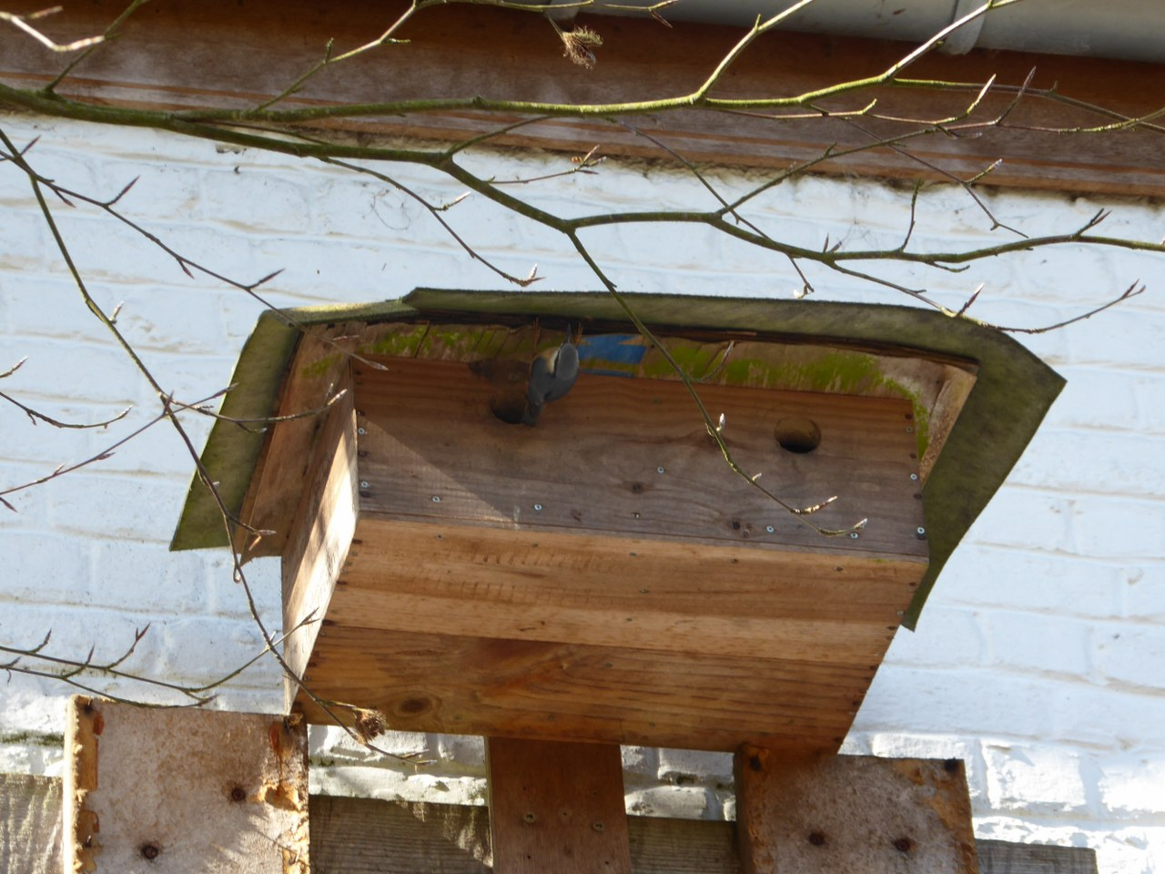 GR121_nestboxes (3)
