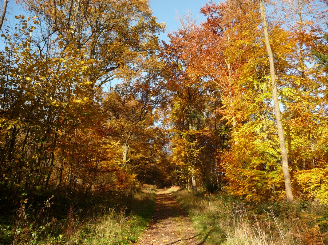 Autumn is a great time to walk through the woodlands of Flanders