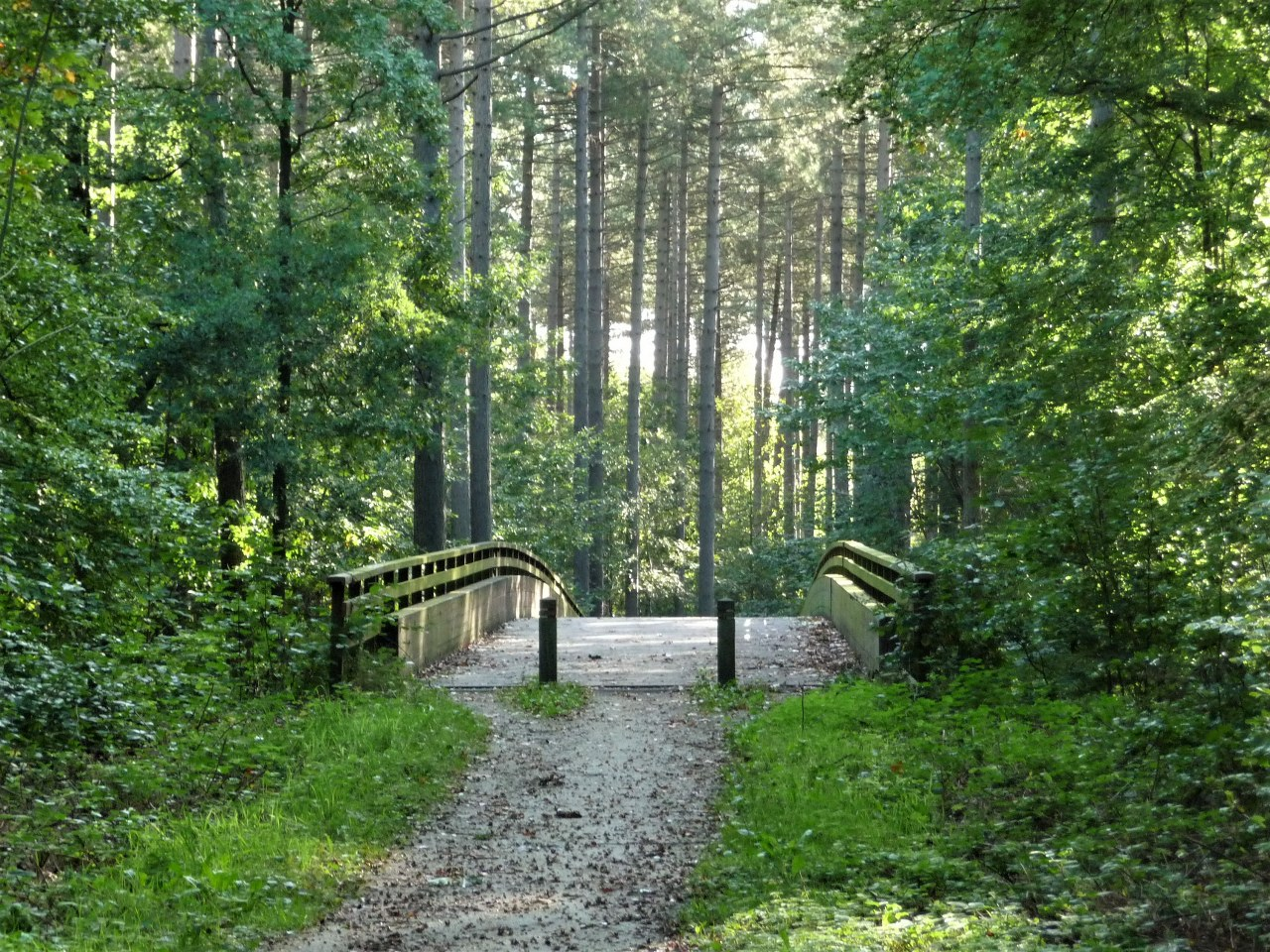 Woodland walks in Flanders