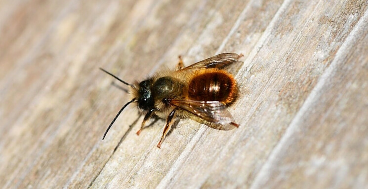 Build a bee hotel during the coronavirus lockdown