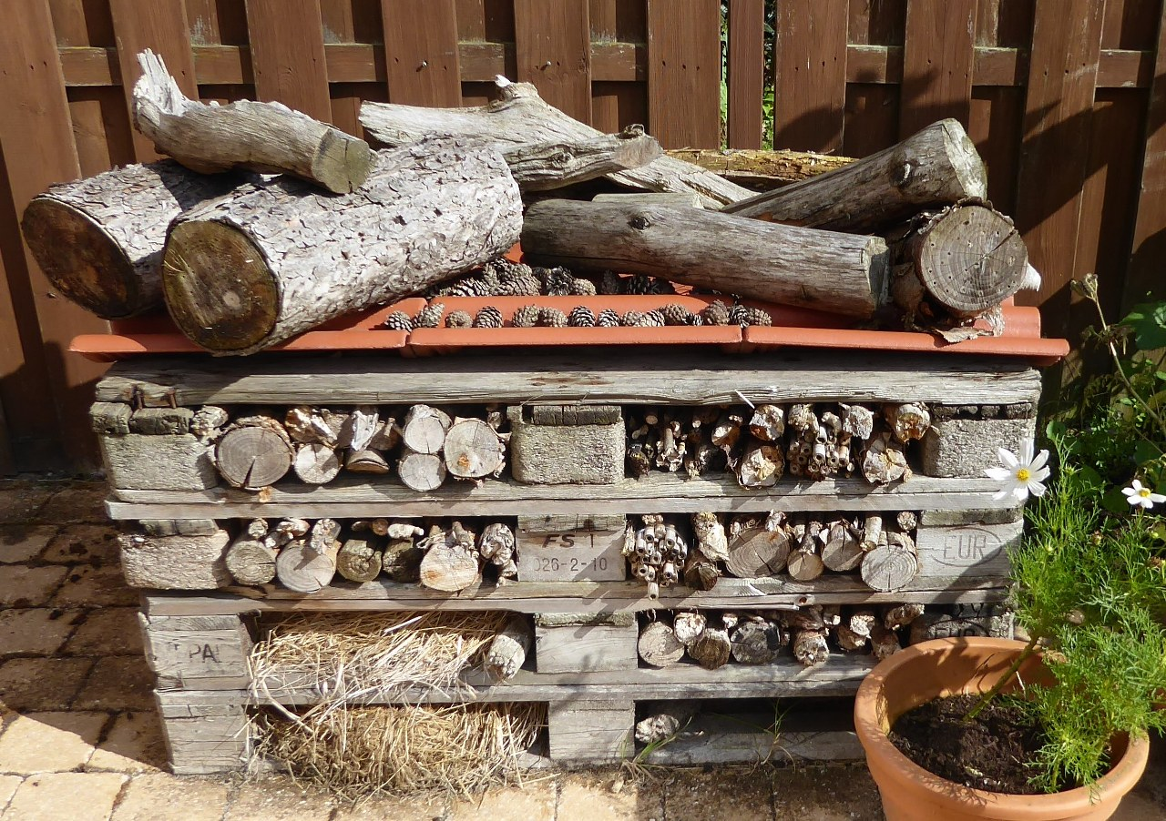 How to make a bee hotel from wooden pallets