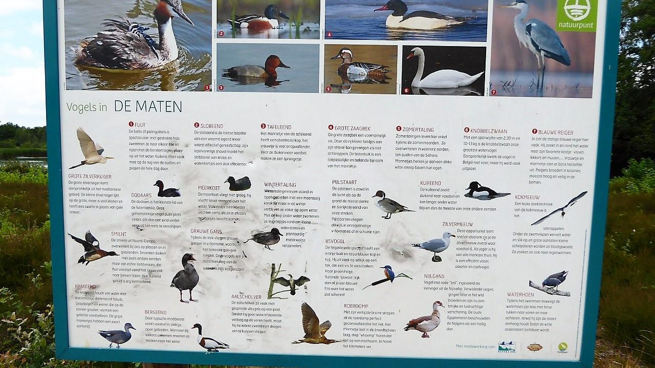Birdwatching at De Maten