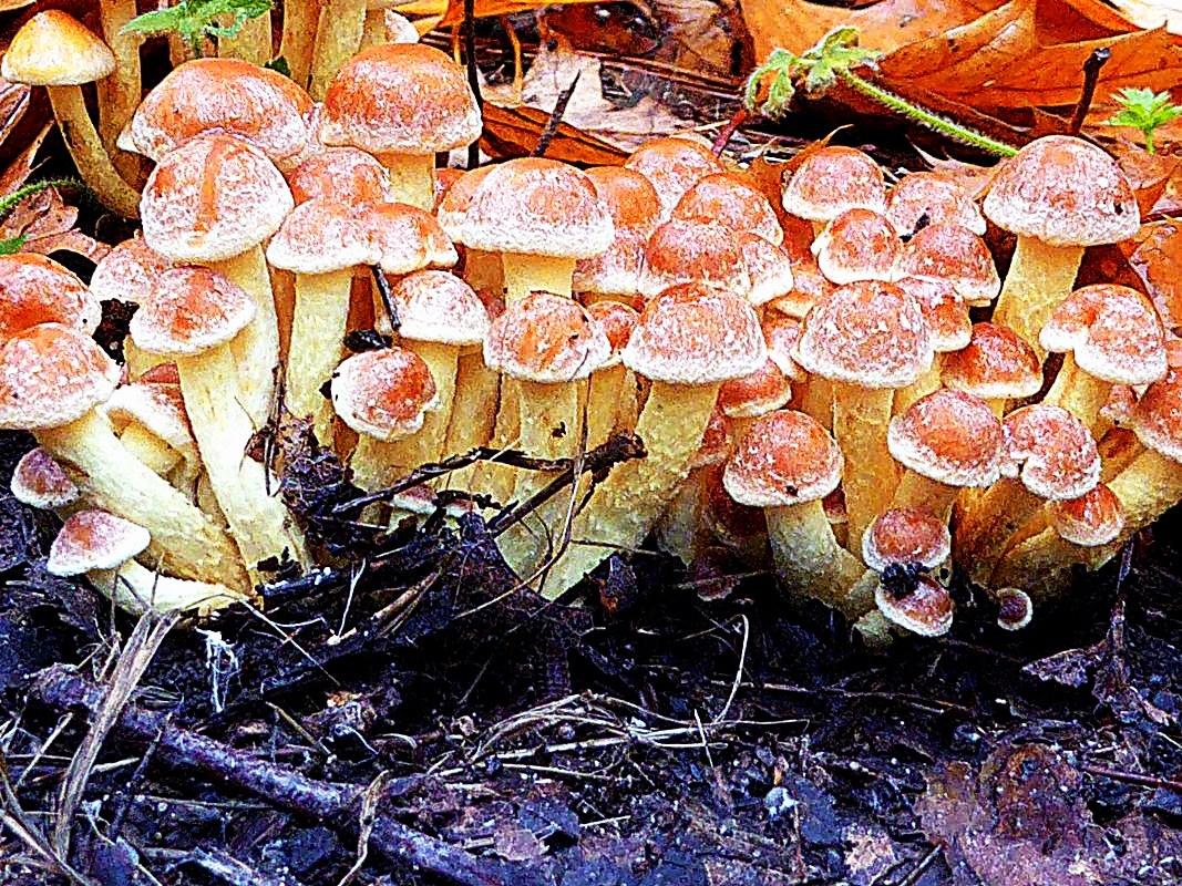 Fungus foray Belgium