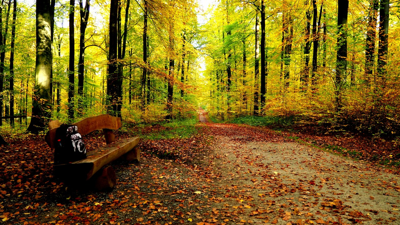 Sonian Forest  walk