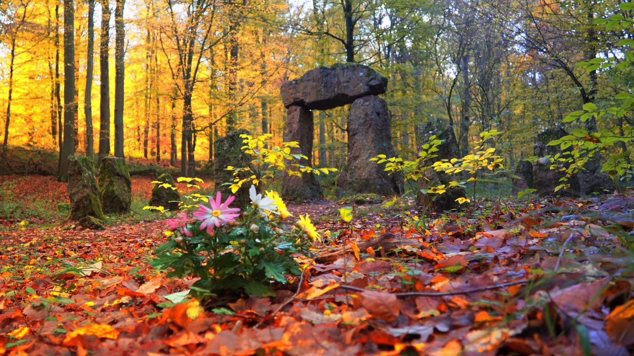 The Foresters Memorial in Sonian Forest Brussels