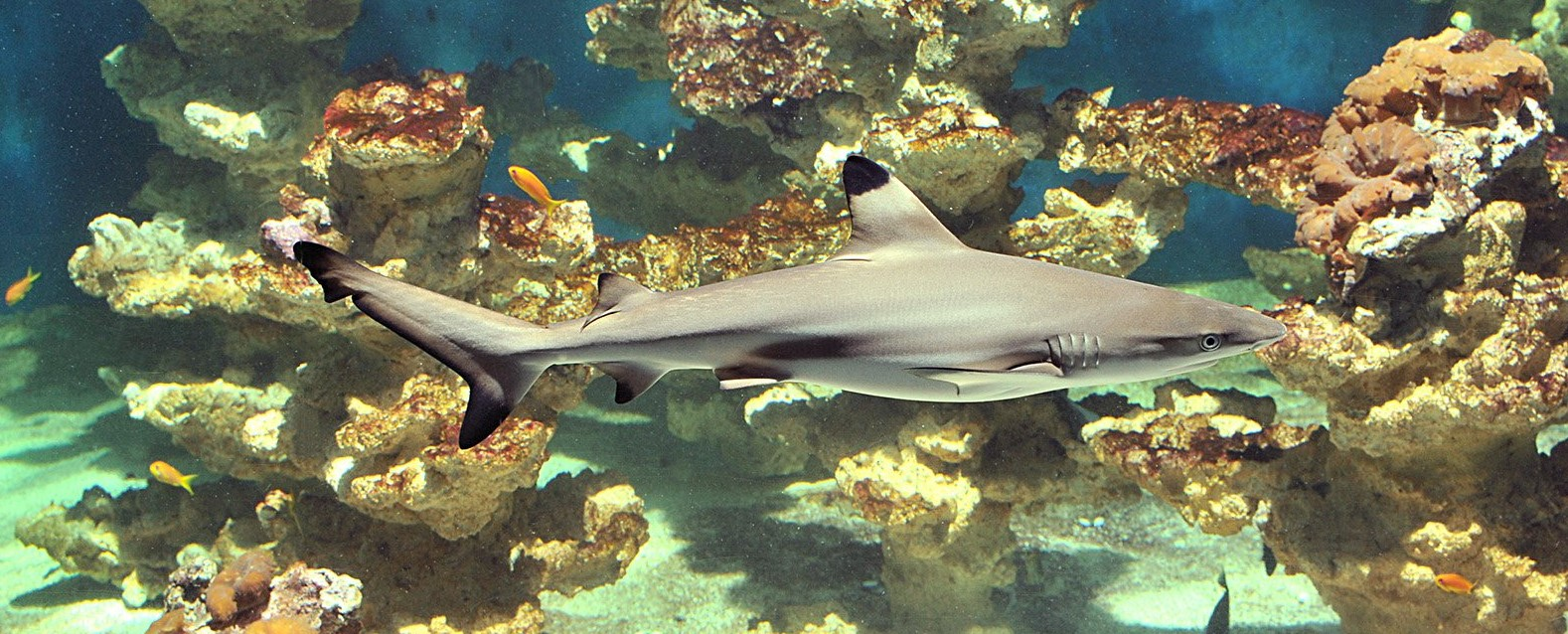 Aquarium Museum Liege Belgium