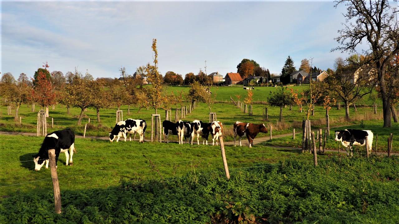 A typical Limburg scene