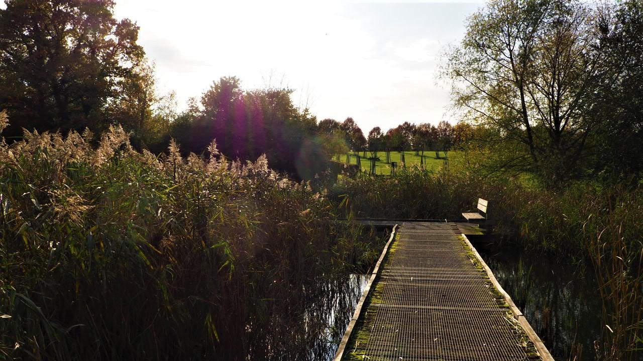 Walking through the reeds