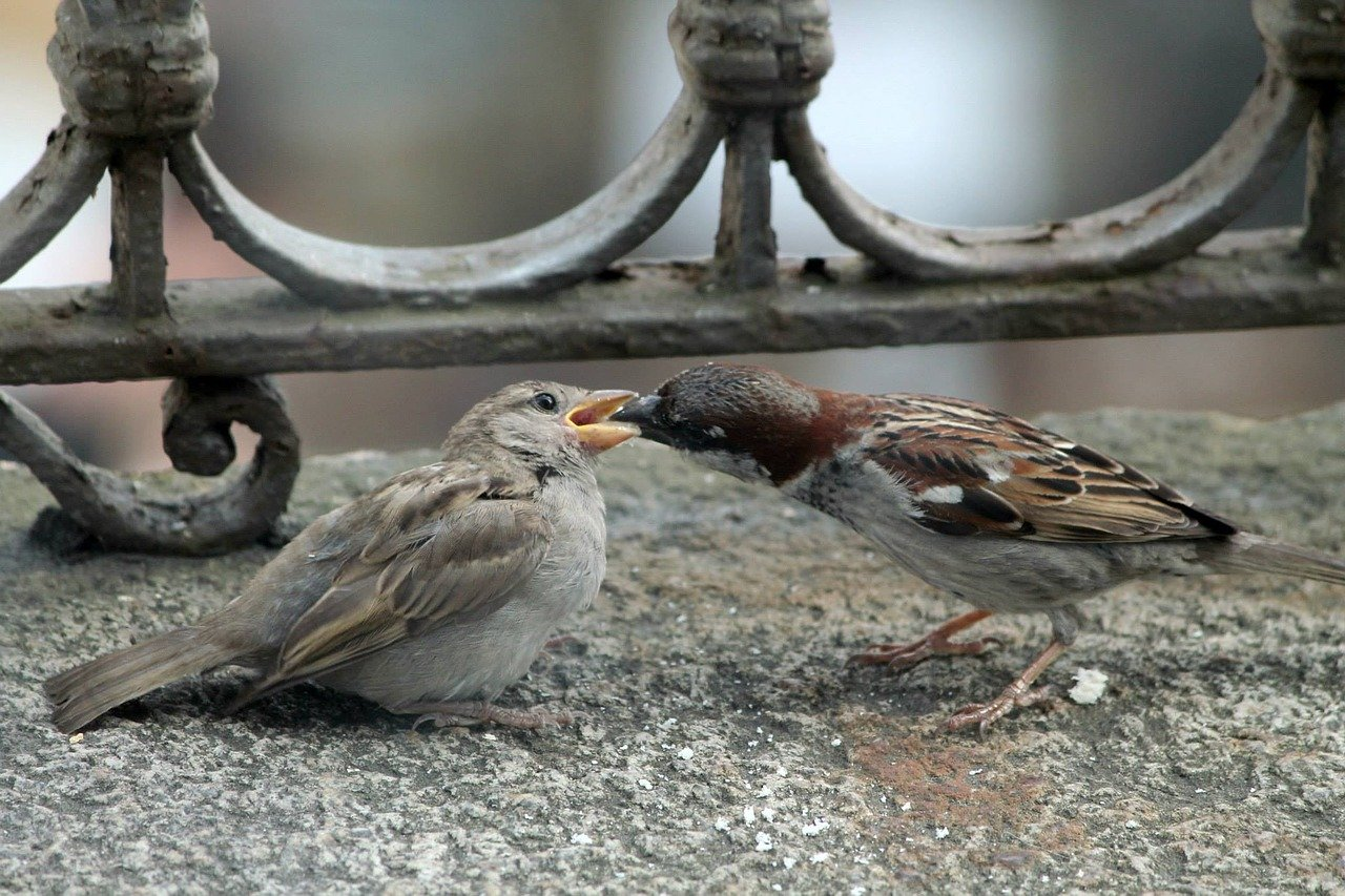 watching garden birds can start from an apartment!