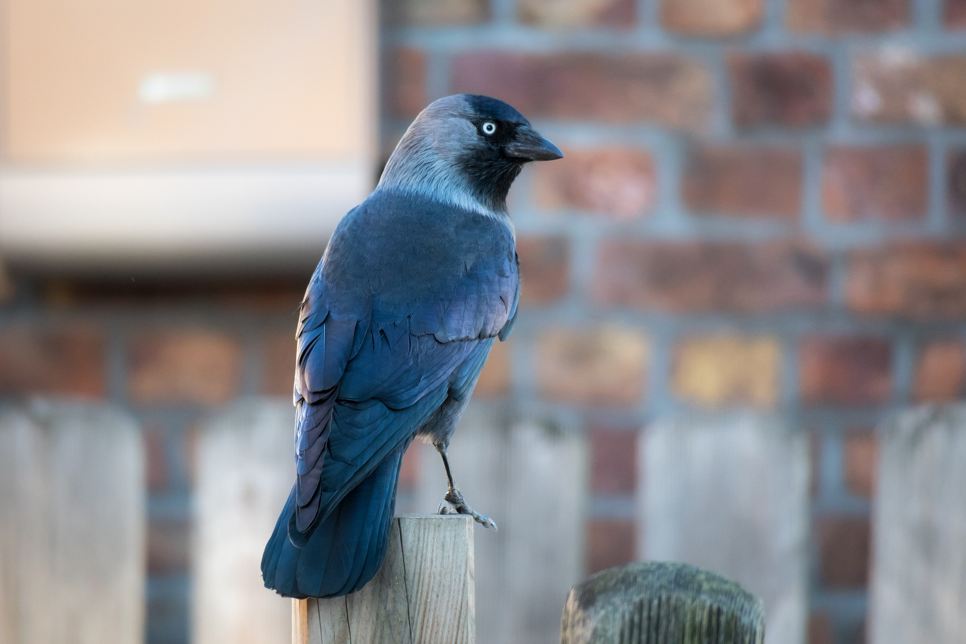 watch city birds during the coronavirus lockdown