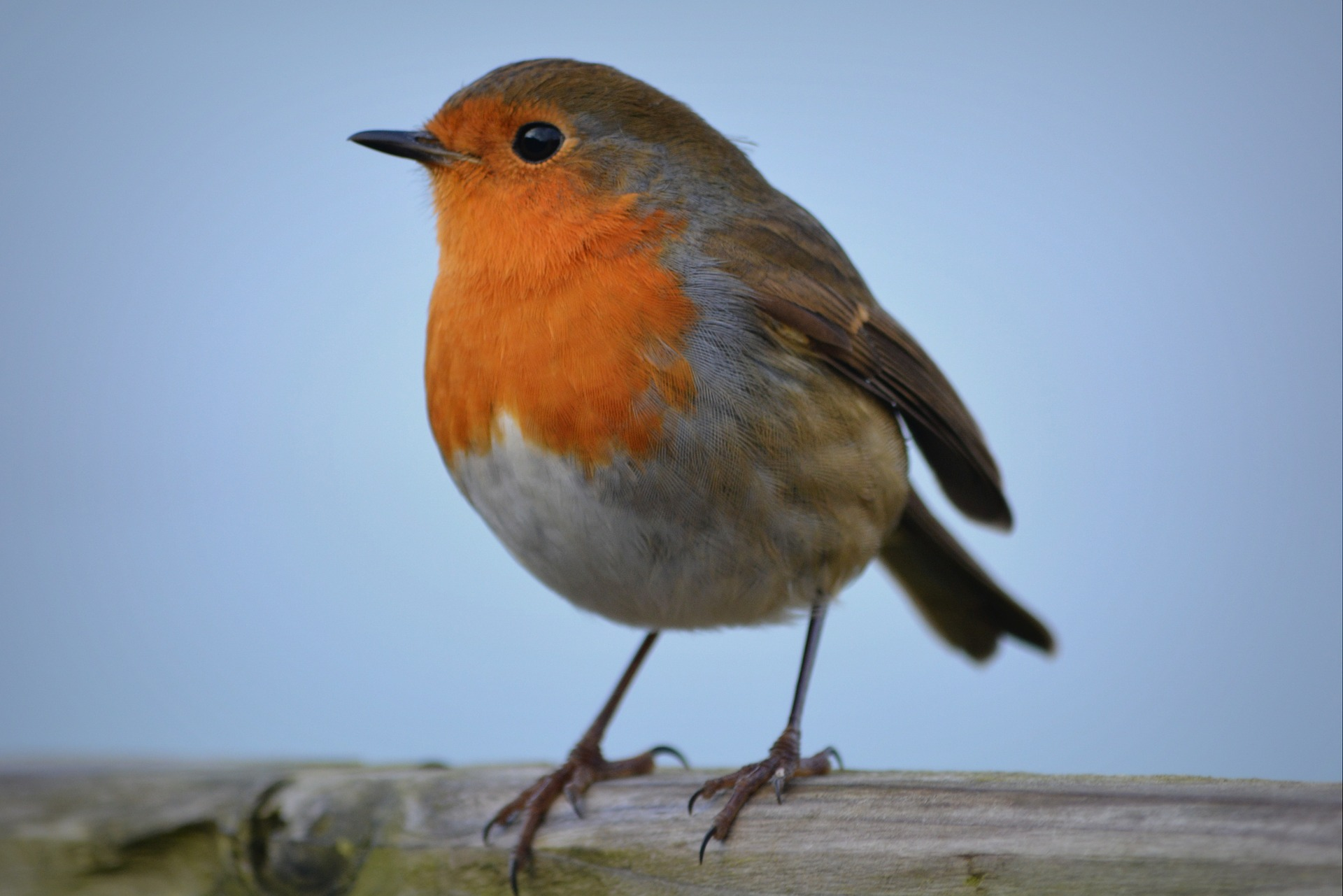 Watching garden birds such as this robin is a fun hobby