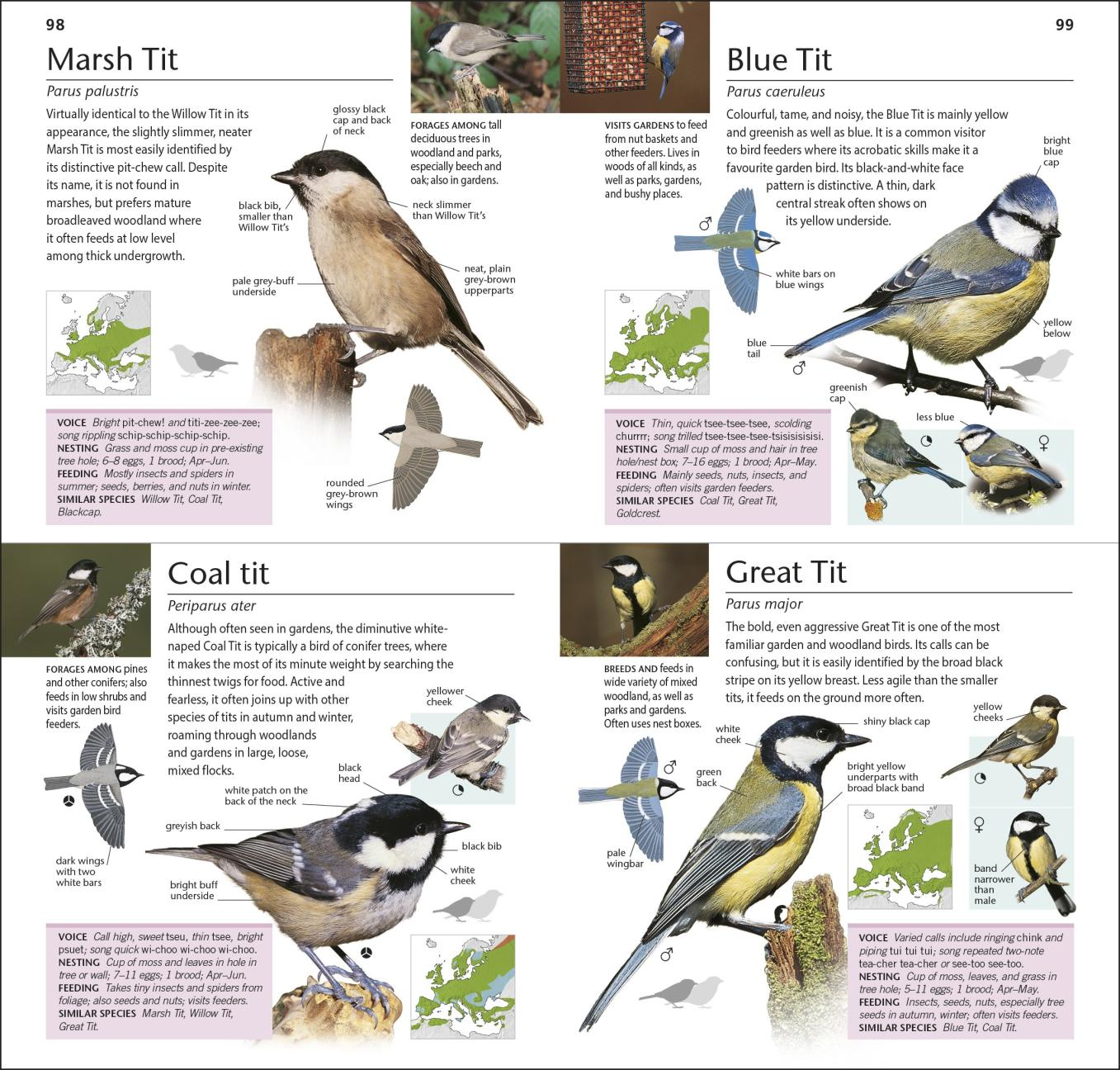 What are the best bird books for children?