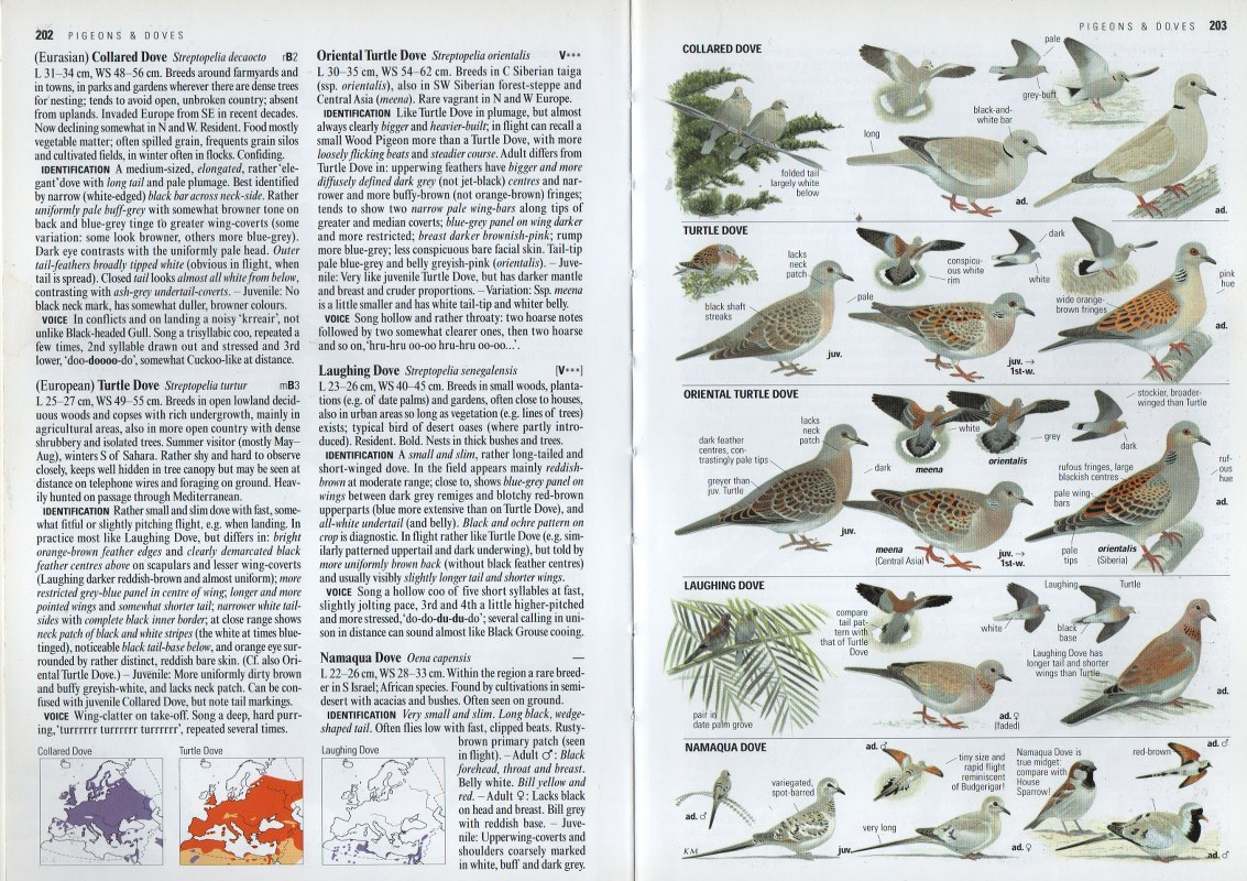 Collins Bird Guide is one of the best bird books for children who are old enough