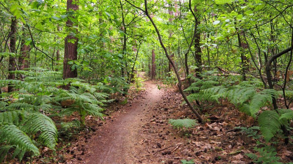 Les bois le long de la vallée du Demer