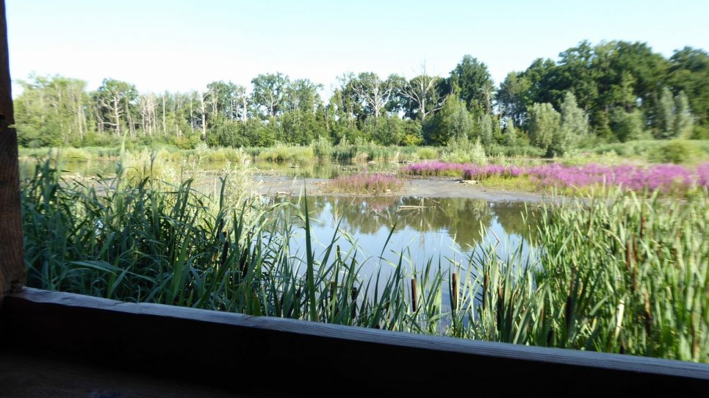 View from bird hide at the Erps-Kwerps Vijvers