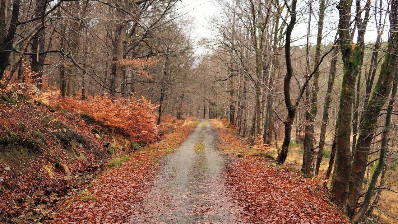 Anliwer Forest
