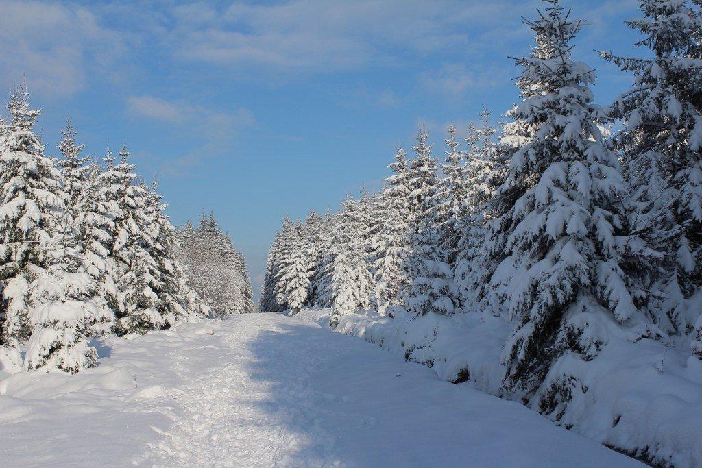 Botrange hike