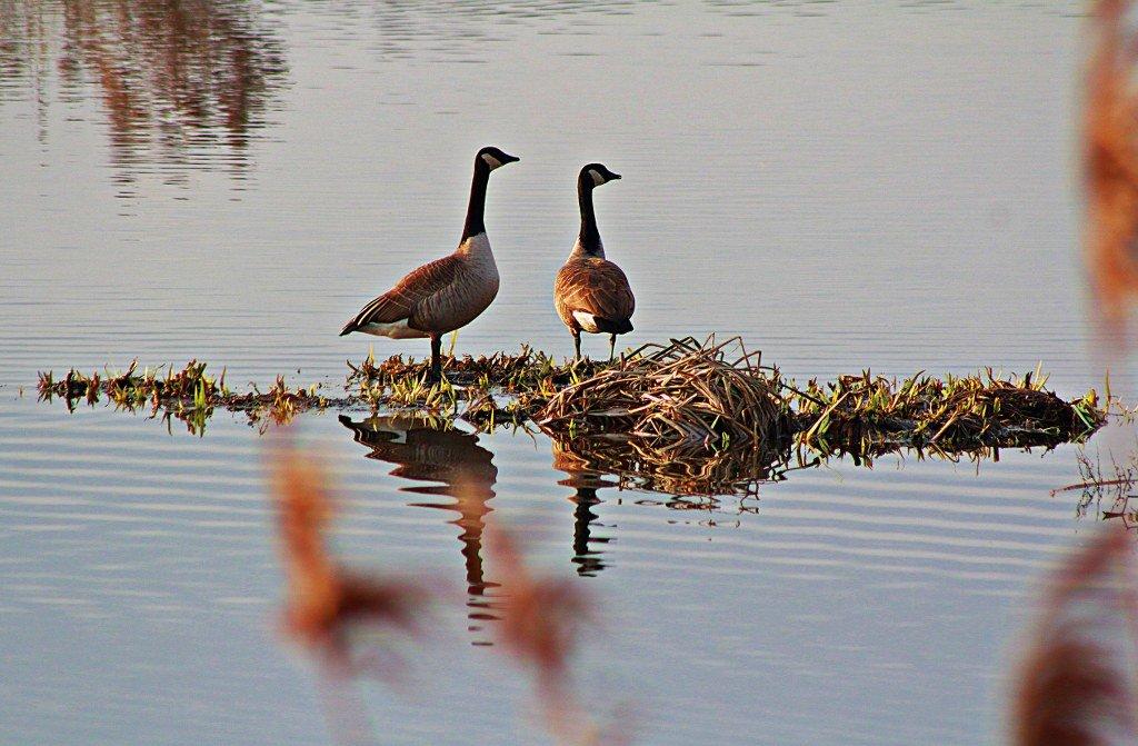 Molsbroek nature reserve Lokeren