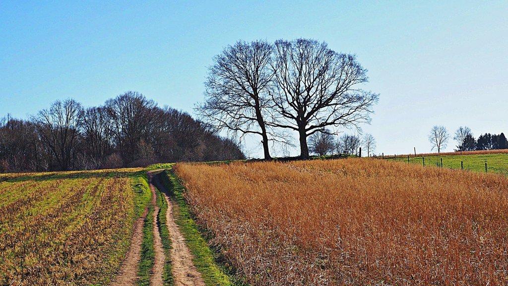 Eikelberg Walk Gelrode