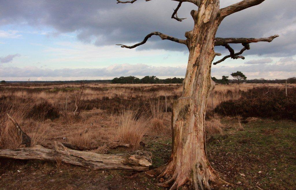 Hiking on Kalmthout Heath