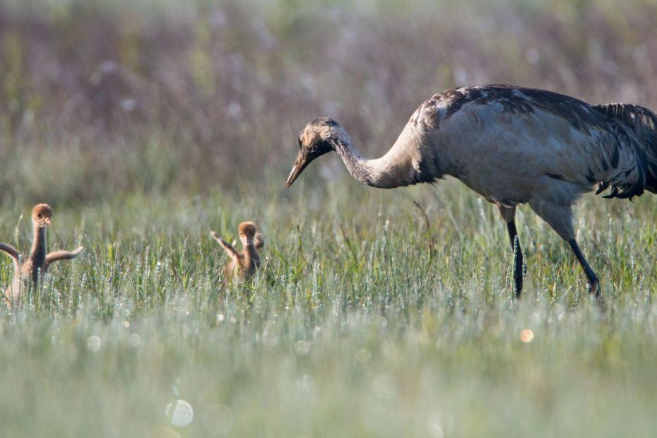Cranes in Belgium