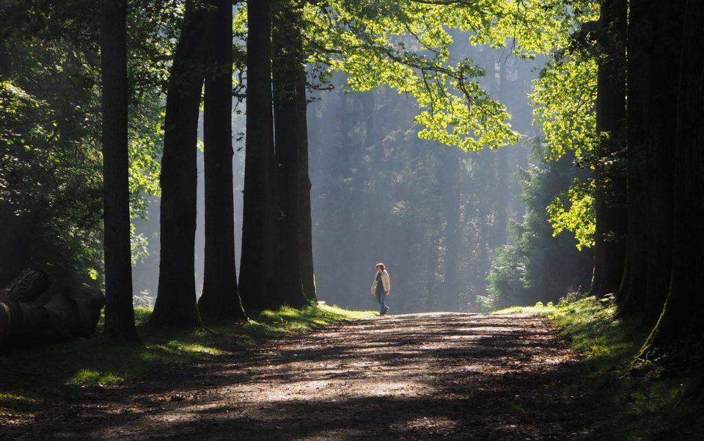 Tervuren forest walk