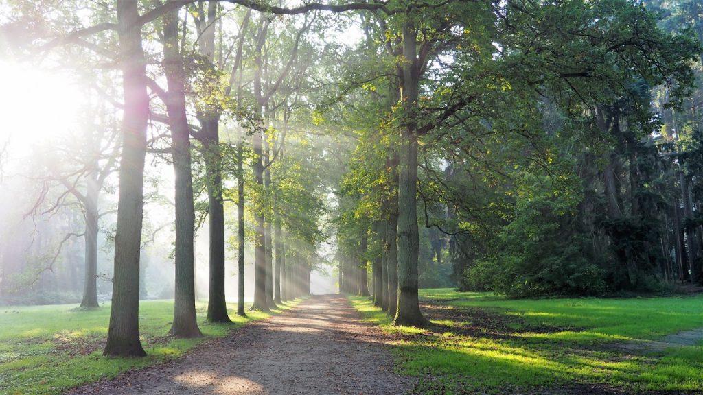 Geographical Arboretum walk