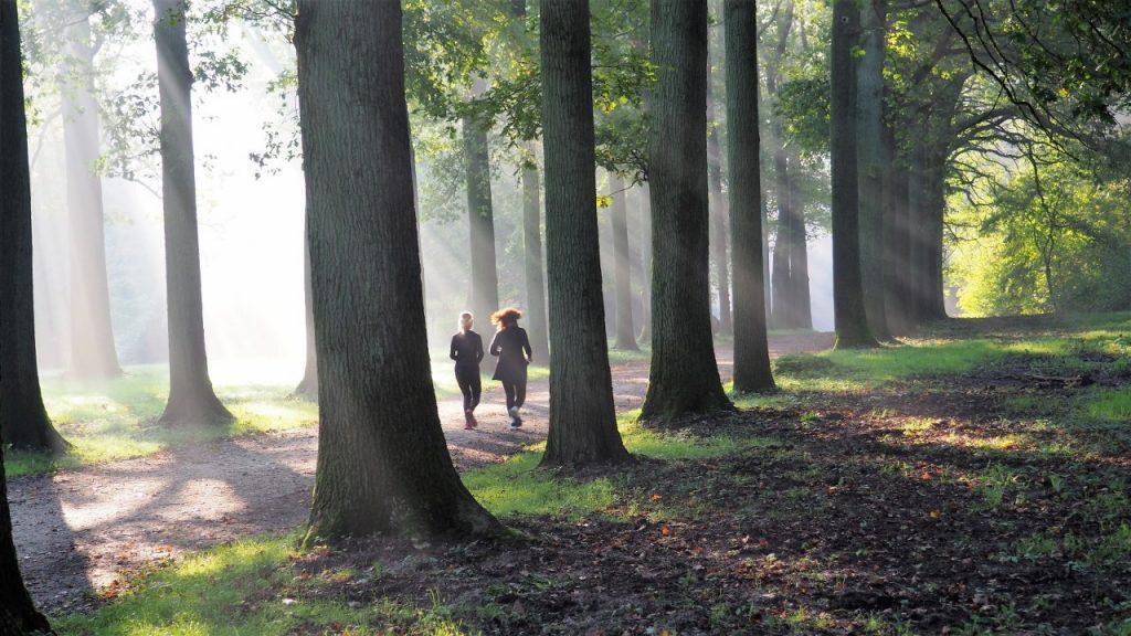 Tervuren West America walk